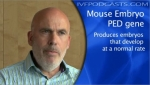 The mouse embryo PED gene produces embryo that develop at a normal rate